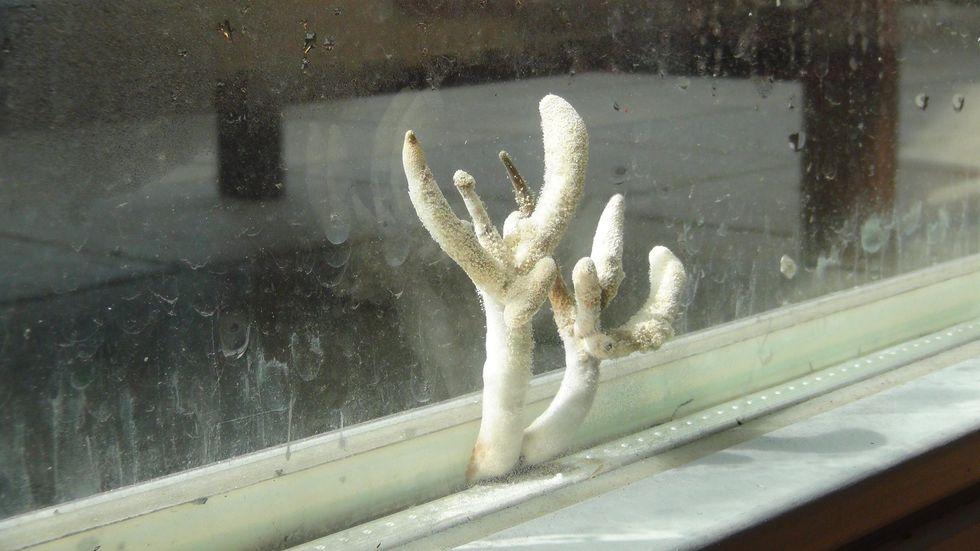 grzyb w szybie