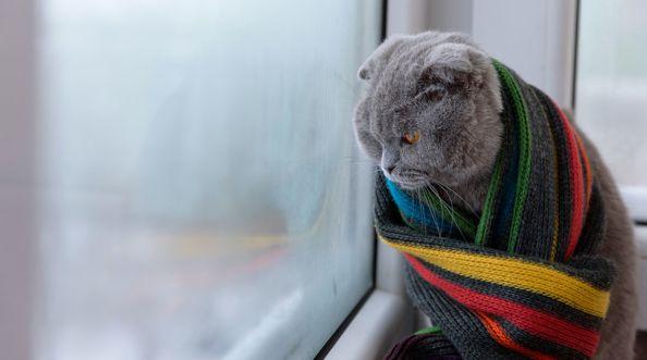 Ciepły montaż okien - zimno w domu