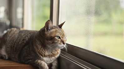 Moskitiera to świetne rozwiązanie, jeśli mieszkasz na wysokim piętrze i boisz się, że Twój pupil może wypaść przez otwarte okno!